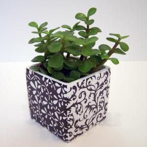 cache pot design noir et blanc la vie aquatique c 39 est notre affaire. Black Bedroom Furniture Sets. Home Design Ideas
